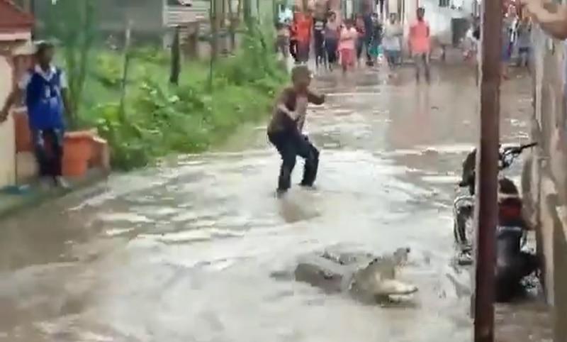 Em vídeo impactante, homem captura crocodilo que apareceu em cidade durante enchente; assista