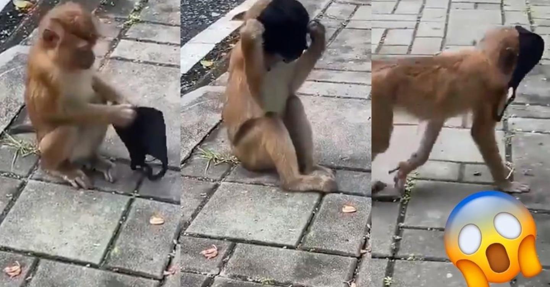 Pequeno macaco