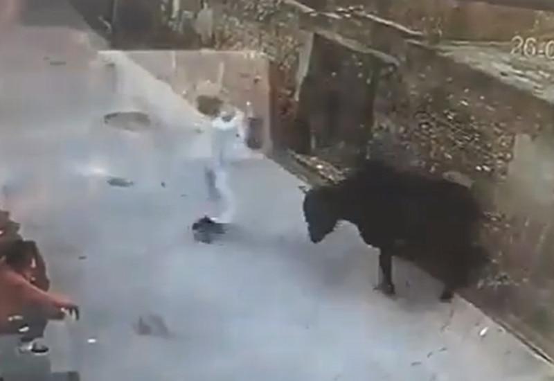 Em vídeo impactante homem ataca boi com pedaço de madeira e animal revida; assista