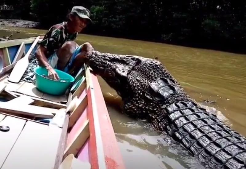 Vídeo surpreendente mostra como homem alimenta 'tranquilamente' enorme crocodilo; assista