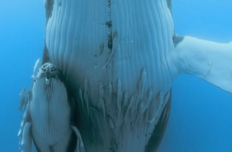Baleia gigante